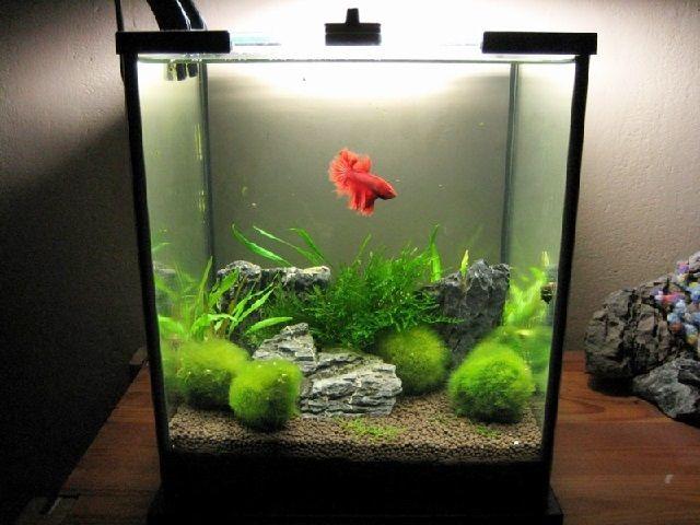 Contoh Desain Aquascape Sederhana Seon One Stop Solution