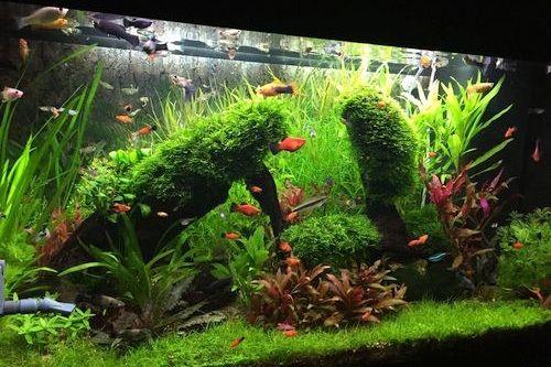 Contoh Gambar Aquarium Aquascape
