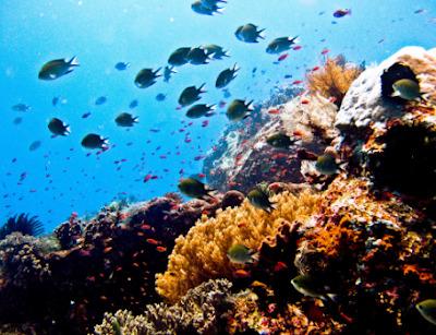 Daftar Tempat Wisata Di Sulawesi Bunaken Terpopuler
