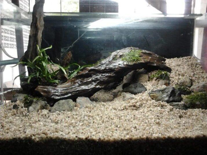Contoh Aquascape Batu Pasir