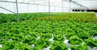 19 Ide Bisnis Pertanian Yang Paling Menguntungkan